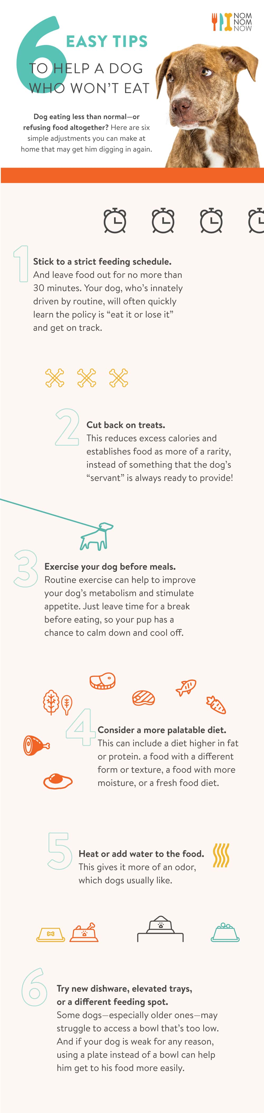 6 easy tips for dogs that are not eating