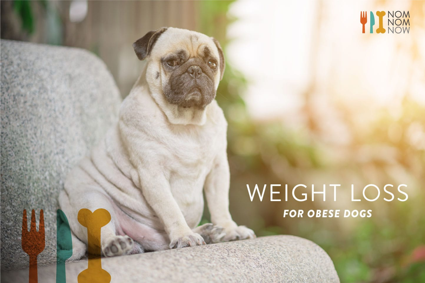 Dogs rapid weight loss causes